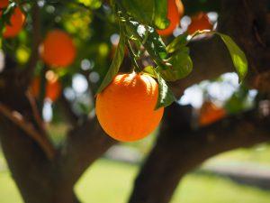 オレンジ(Orange)