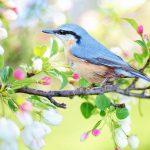 春の先触れ