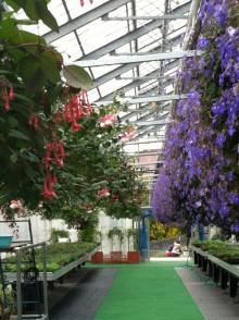パルシェの温室