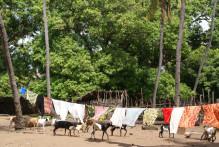 ヤギと洗濯物