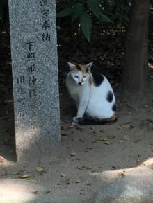 福岡・住吉大社の猫